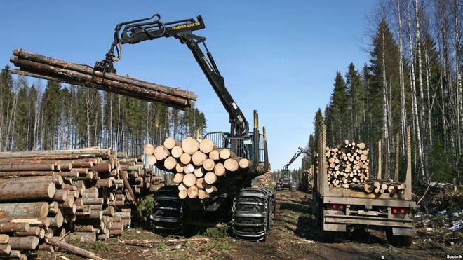 В Украине стали меньше заготовлять древесины