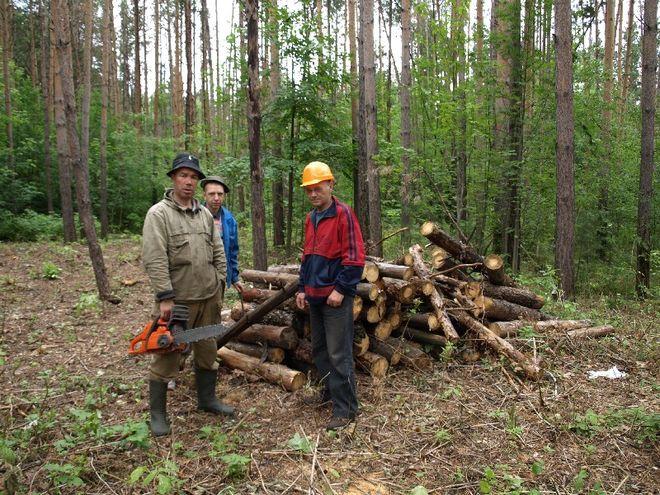 В каких регионах Украины больше всего рубят лес - фото
