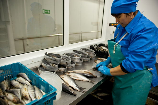 Из-за ботулизма, Украину научат производить качественную рыбу