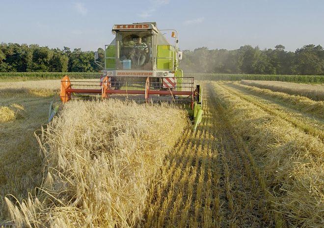 Аграрии уже собрали 20 млн тонн ранних зерновых