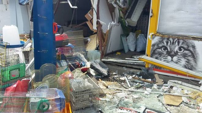 Из-за сноса рынка на Лесном массиве в Киеве погибли животные из зоомагазина