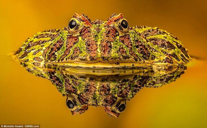 Названы победители конкурса фотографий животных Creatures Great and Small