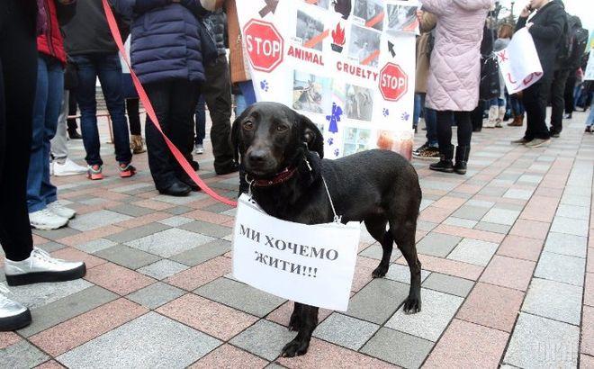 Порошенко ввел уголовную ответственность за жестокость над животными