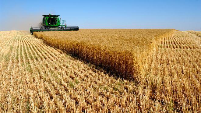 Как жара отразится на урожае зерновых