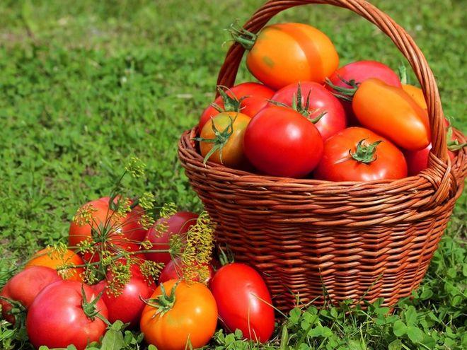 В Украине начали резко падать цены на помидоры