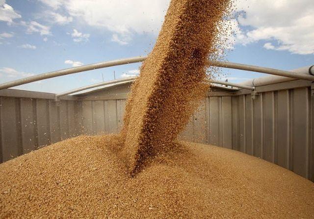 В Украине сократились запасы зерновых
