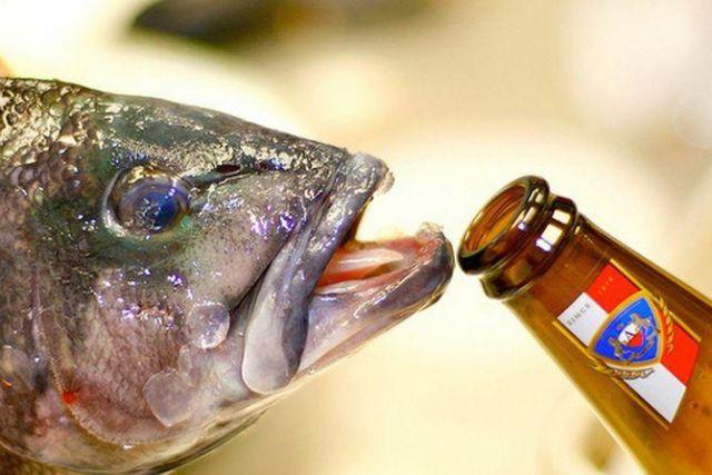 Ученые обнаружили, что золотые рыбки могут выживать благодаря алкоголю