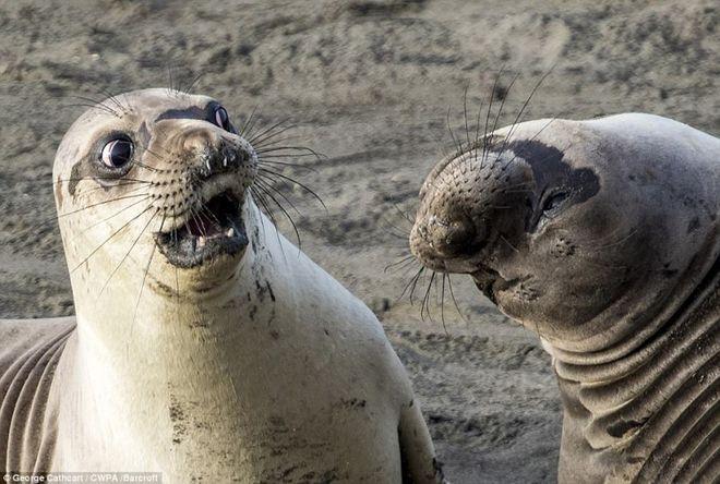 Выбрали самые смешные фото животных