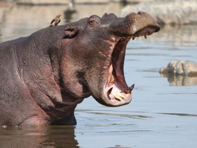 Как выглядят крупнейшие животные в мире