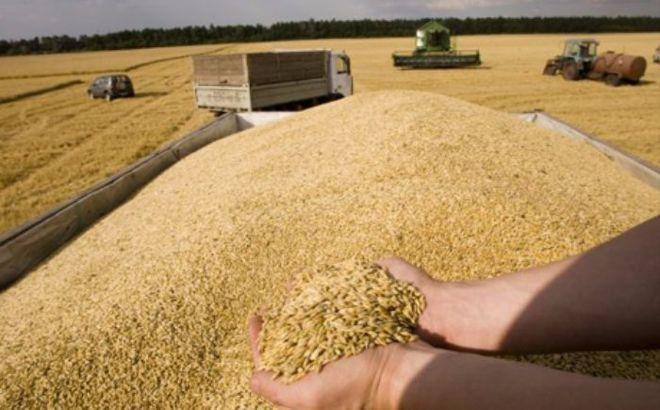 В Минагропроде отчитались об увеличении экспорта зерновых
