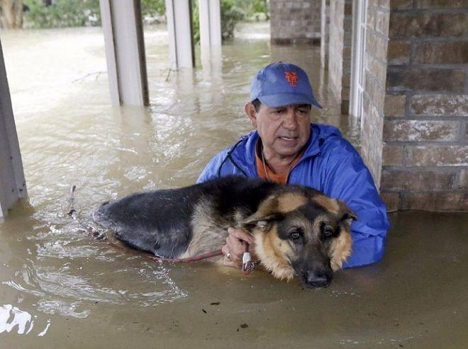 """Как в США спасали животных во время урагана """"Харви"""""""