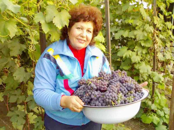 Виноград в Украине выгоднее выращивать, чем зерно