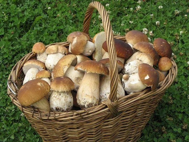 В Украине белые грибы уже стоят 220 грн
