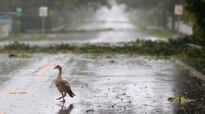 Ураган «Ирма» обрушился на Флориду (фото)