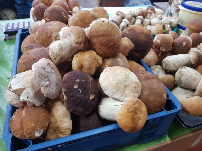 Украинские грибники распродают свой урожай: самые яркие фото