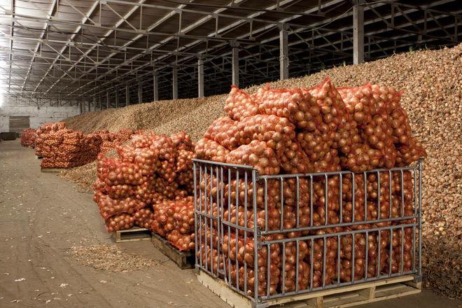 ФГВФЛ продает овощехранилище под Киевом