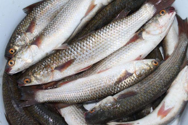 В Запорожской области зафиксировали массовую гибель рыбы из-за нерасчищенного лимана
