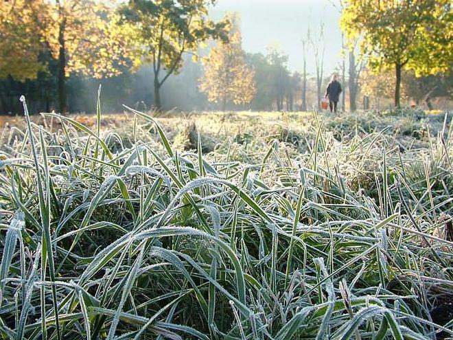 Синоптики предупредили украинцев о заморозках