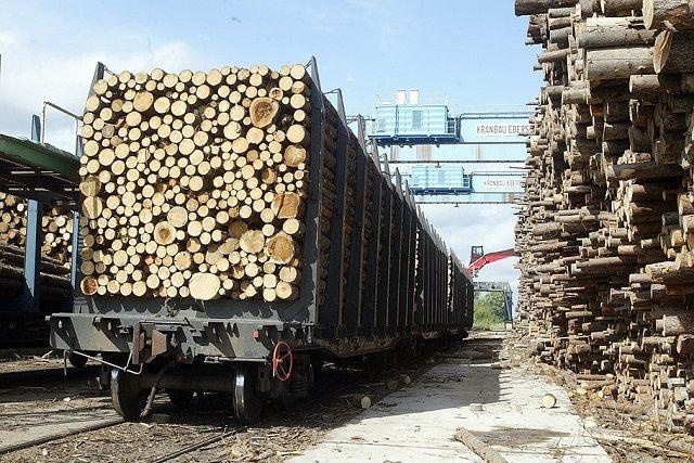 Полицейские проконтролируют вывоз украинского леса