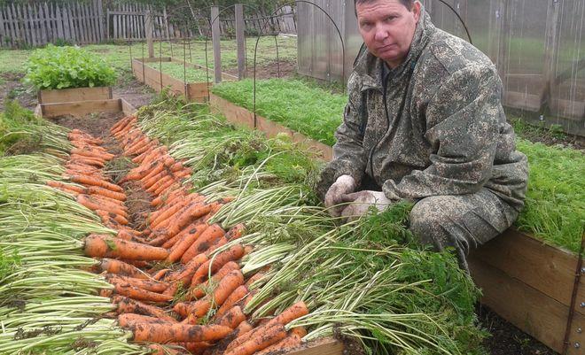 Украинские фермеры больше не хотят выращивать морковь