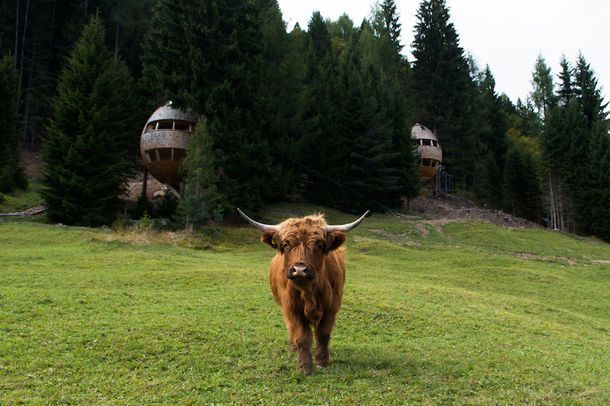 В Итальянских Альпах появился необычный дом-шишка