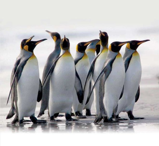 В Чили пингвины сорвали многомиллиардный проект горнодобывающей компании