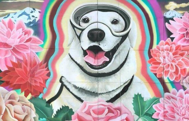 В Мексике нарисовали мурал в честь собаки-спасателя