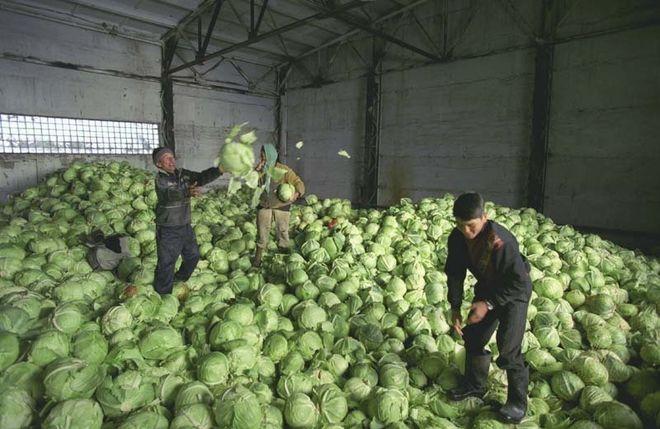 Украинцы не хотят покупать капусту: даже низкие цены не помогают