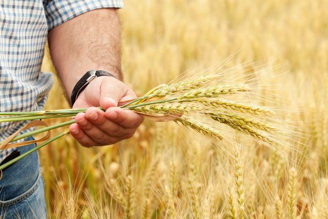 Три способа оформить аграрную расписку в Украине