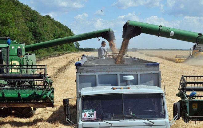 Минагропрод рассчитывает на рекордный урожай зерновых в этом году