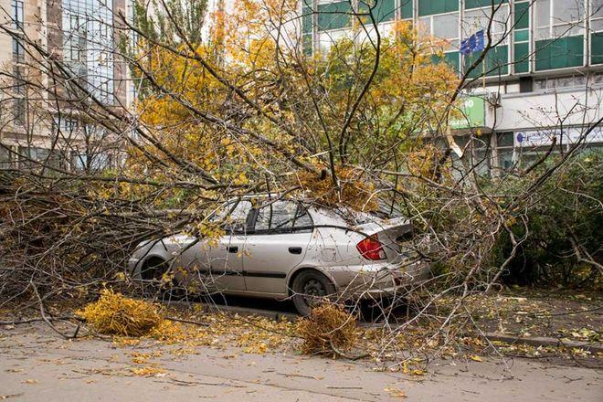 Опубликованы фото последствий сильного ветра в Киеве