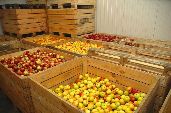 В Украине не хватает фруктохранилищ: сколько нужно денег для их строительства