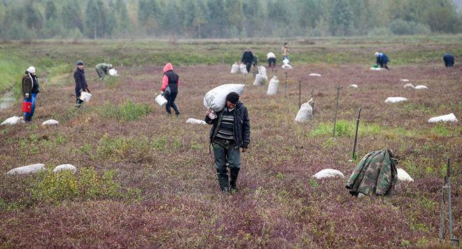 В сельском хозяйстве Украины создадут 16 тыс. рабочих мест