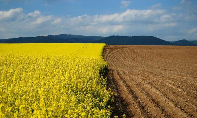 ВУкраинском государстве хотят продлить запрет на реализацию сельхозземли