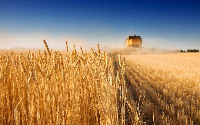 Во Всемирном банке назвали сроки запуска рынка земли в Украине