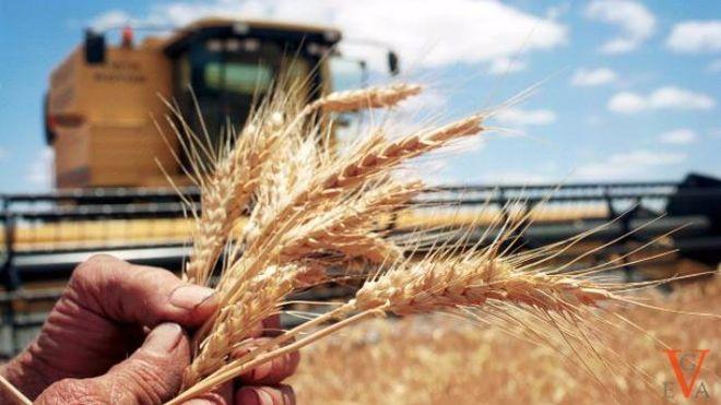 Германия продолжит развивать украинский агросектор