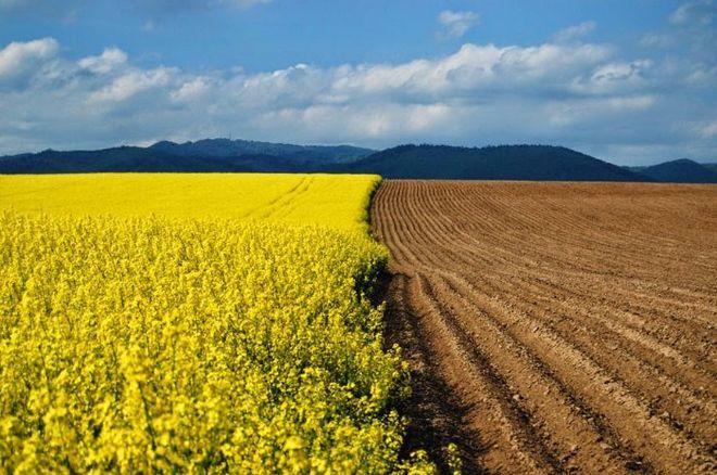 Парламент Украины продлил мораторий на реализацию  сельхозземель до 2019г