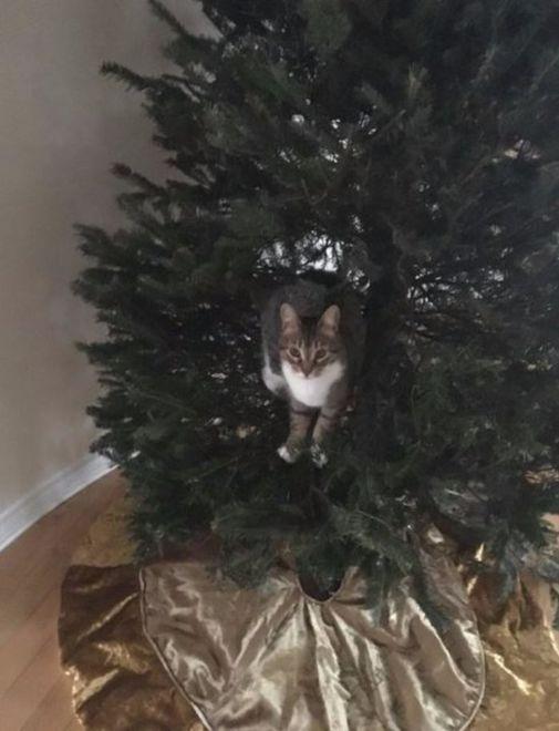 """Коты """"уничтожают"""" елки по всему миру"""