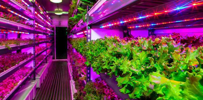 Украинские фермеры хотят выращивать овощи и ягоды под светодиодами