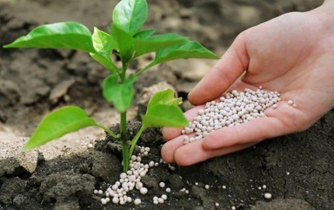 В Украину запретили ввозить 2 вида удобрений