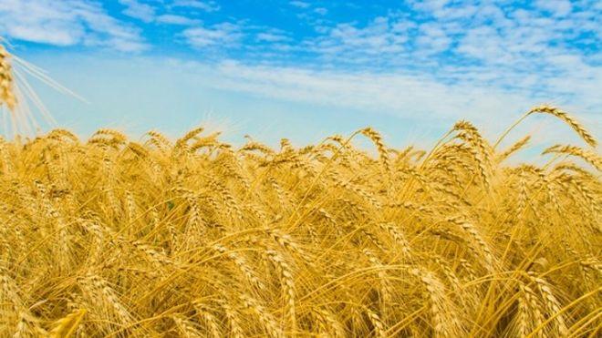"""""""Аграрный фонд"""" увеличил количество контрактов с малыми фермерами"""