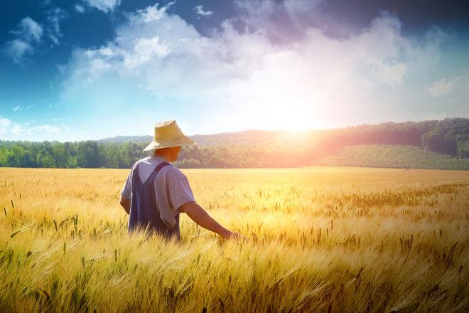 Украинских аграриев поддержит гарантийное агентство