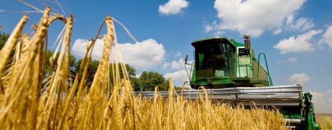 Украина существенно нарастила экспорт агропродукции в ЕС