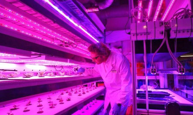 Кто, где и почему использует вертикальные овощные фермы