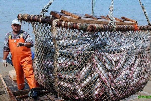 Санкции мешают Керчи возрождать рыболовную отрасль