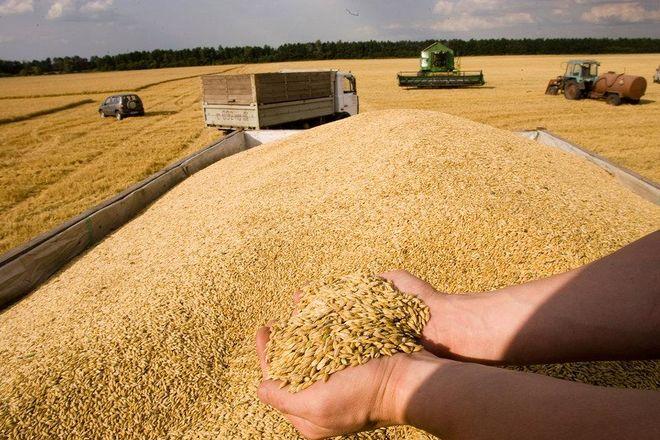 Украина почти исчерпала квоты на поставку зерна в ЕС