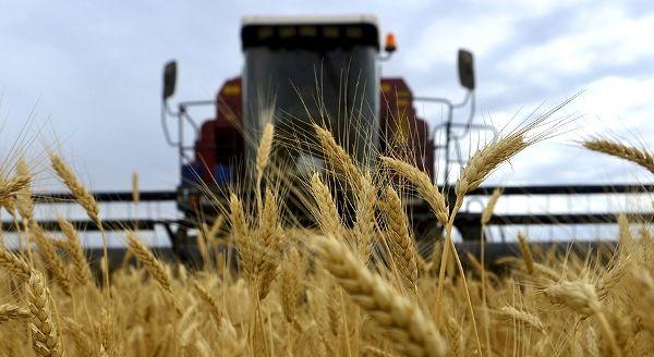 Украина сменит покупателя пшеницы