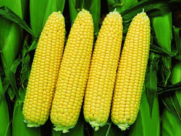 Турция стала активно закупать украинскую кукурузу
