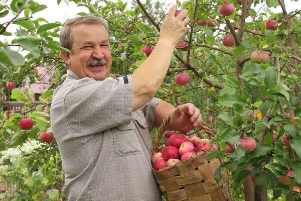 Украинские садоводы выходят на рынок криптовалют
