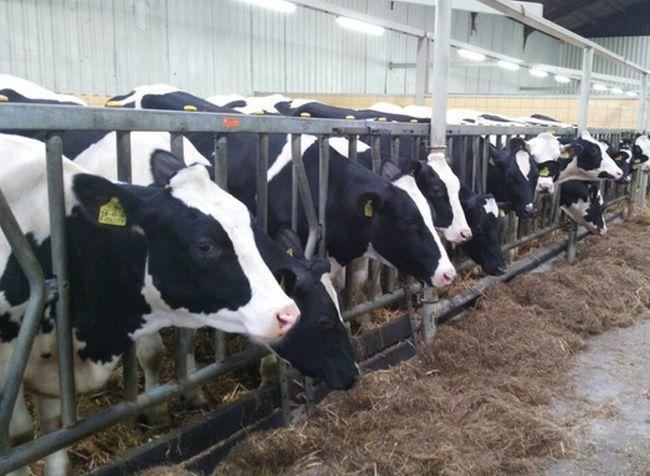 В Луганской области построят молочный комплекс на 100 голов КРС